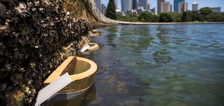 The Australian city of Sydney is creating new living spaces for its marine inhabitants in an effort to mitigate the negative impacts of caused by the development of the city's harbour. (Image credit: City of Sydney)